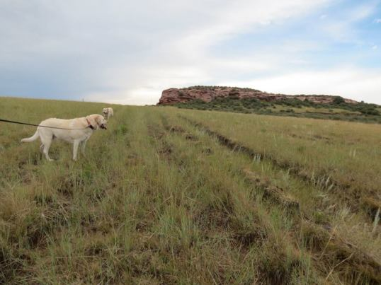 overland trail ruts